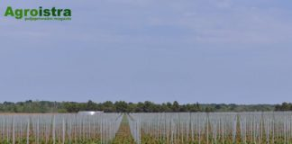 vinograd navodnjavanje